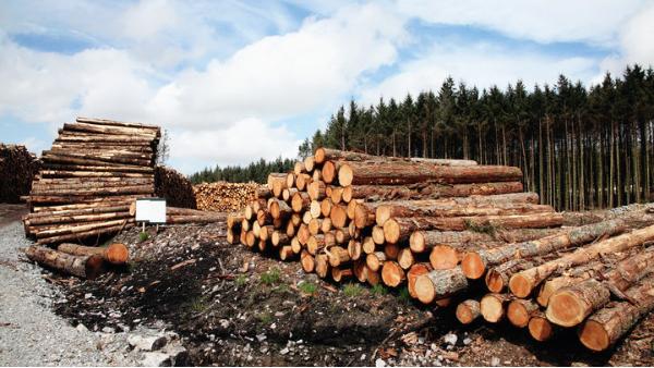 俄罗斯提议的2022年原木出口禁令将对全球林产品市场产生深远影响