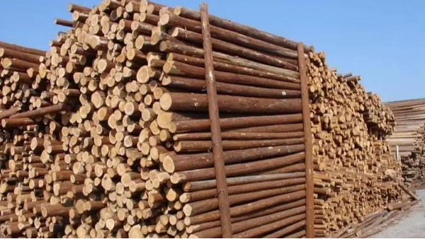 俄罗斯2月份木材出口增长2%