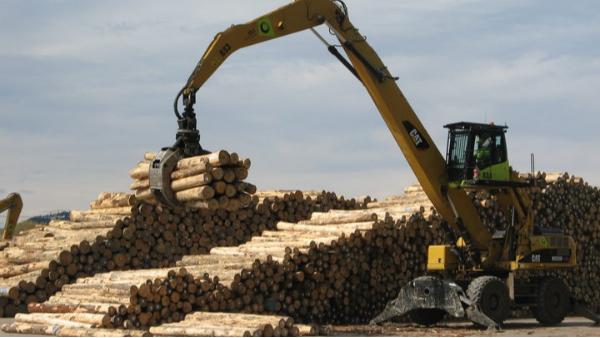 世界各大松木锯木厂