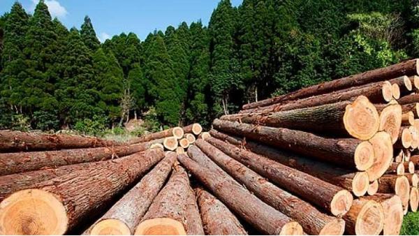 四川防腐木厂家告诉你:硬木与软木有什么区别?