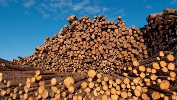 为什么可持续木材很重要?