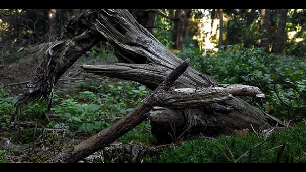 为什么好的木材都是国外生长的?