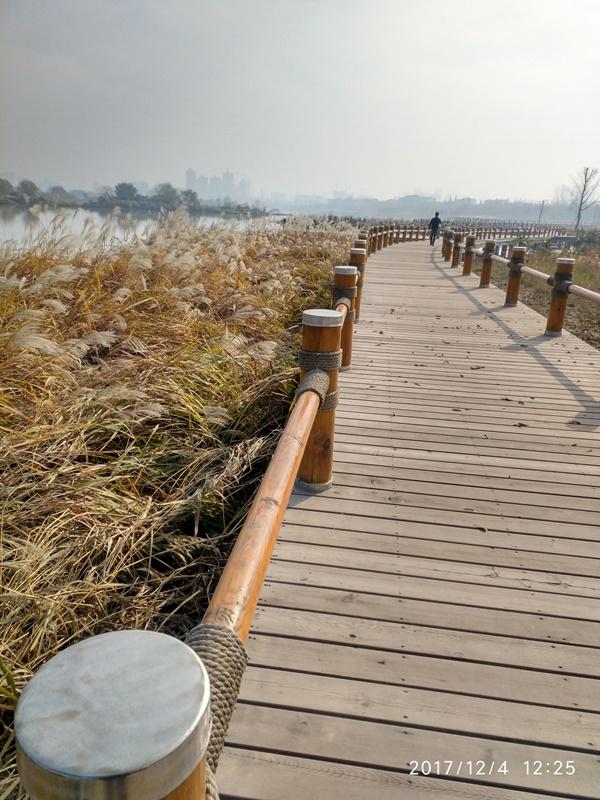 """陕西汉中""""一江两岸""""湿地公园红雪松木栈道 (4)"""