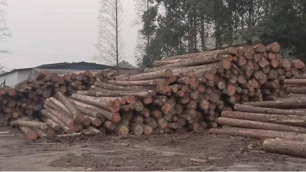 进口木材行业会面临重新洗牌吗?