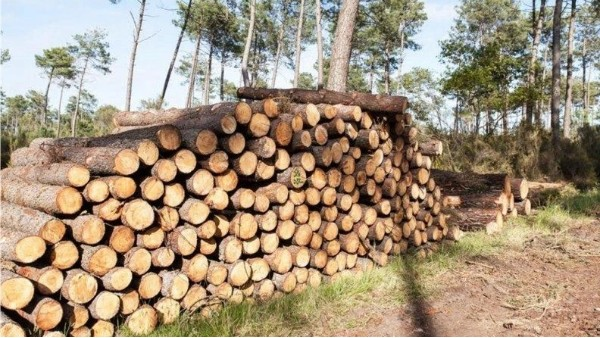 进口木材趋势分析概况