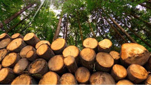 北美和日本木材的性能比较