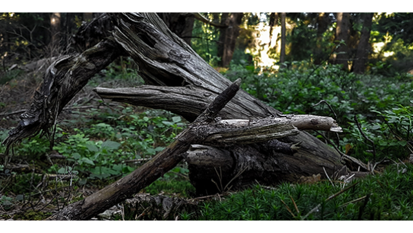 树是一种天然药物