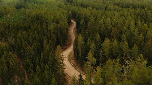 木材可以防止细菌滋生