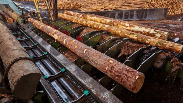 樟子松防腐木为什么被广泛使用?