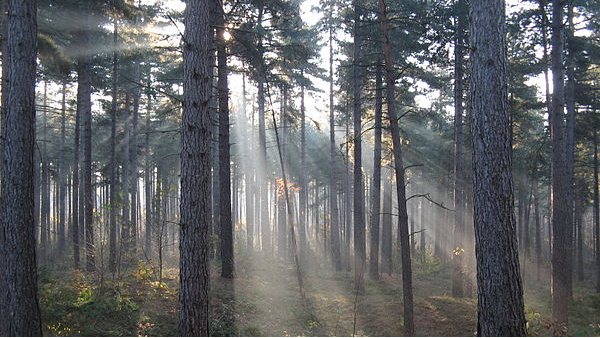 2021年俄罗斯向36个国家/地区出口木材