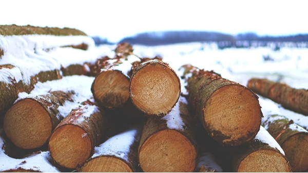 樟子松防腐木工程产品的养护是一件备受关注的事!
