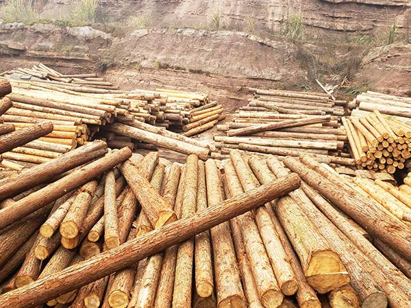 新弘瑞森木材原材料