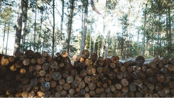为什么选择芬兰松防腐木做木屋?
