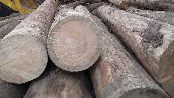 木材的保护措施(2)