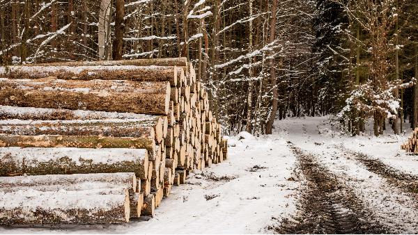 为什么要用樟子松防腐木?关于松树和云杉对人体健康的科学数据